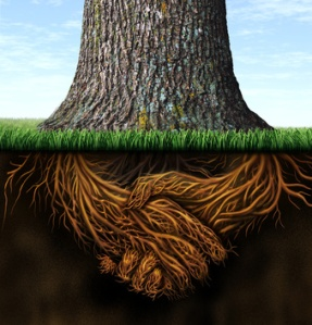 Tree roots signifying trust